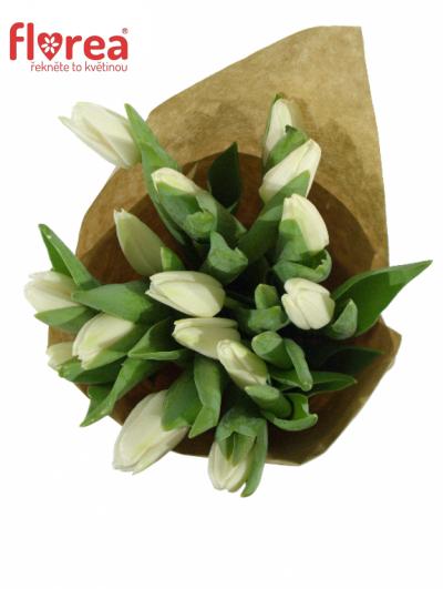Kytice 15 bílých tulipánů WHITE DREAM 35cm-papír