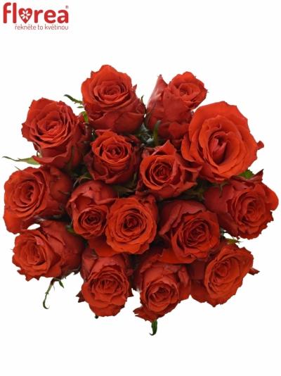 Kytice 15 červených růží BRIGHT TORCH