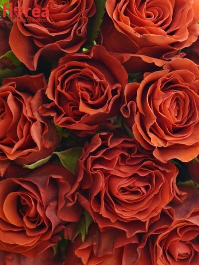 Kytice 15 červených růží EL TORO 30cm