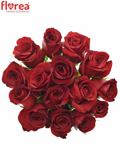 Kytice 15 červených růží FREEDOM 40cm