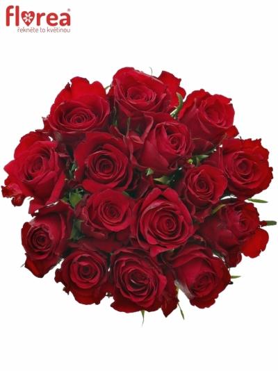 Kytice 15 červených růží NATURES RED