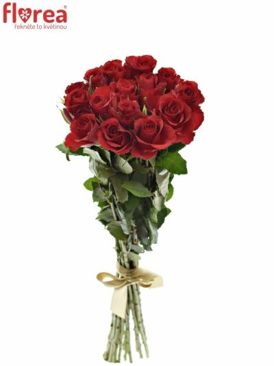 Kytice 15 červených růží RED CALYPSO 60cm