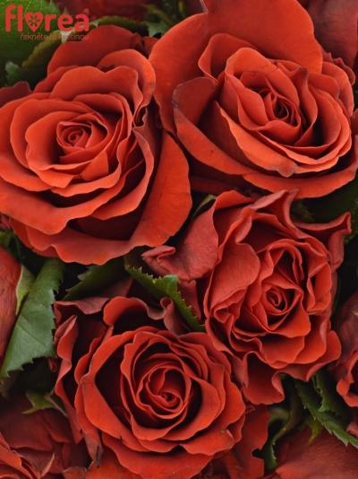 Kytice 15 červených růží RED CORVETTE