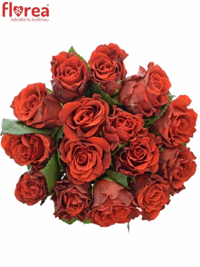 Kytice 15 červených růží RED CORVETTE 40cm