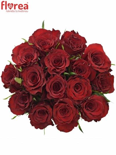 Kytice 15 červených růží RED DRAGON 50cm