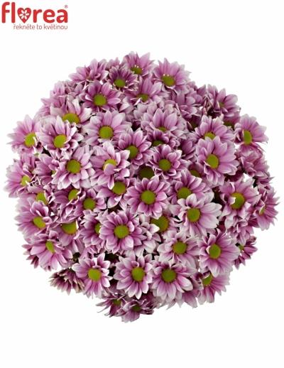 Kytice 15 chryzantém HAYDAR PINK