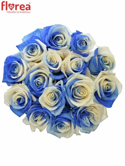 Kytice 15 duhových růží RAINBOW BLUEWHITE 70cm