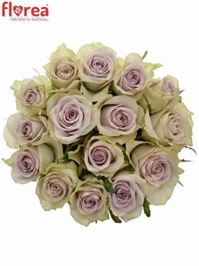 Kytice 15 fialových růží FIFTH AVENUE! 50cm