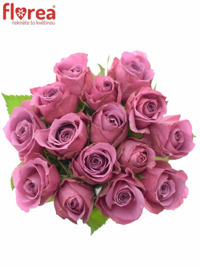 Kytice 15 fialových růží NEW ORLEANS 50cm