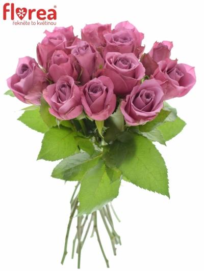 Kytice 15 fialových růží NEW ORLEANS 40cm