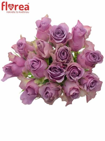 Kytice 15 fialových růží NIGHTINGALE 50cm