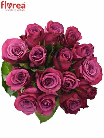 Kytice 15 fialových růží SHOGUN 60cm