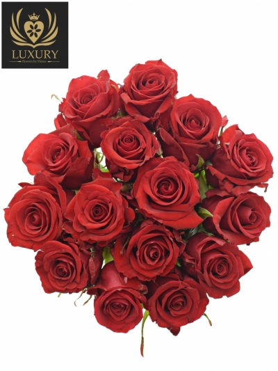 Kytice 15 luxusních růží RED EAGLE 55cm