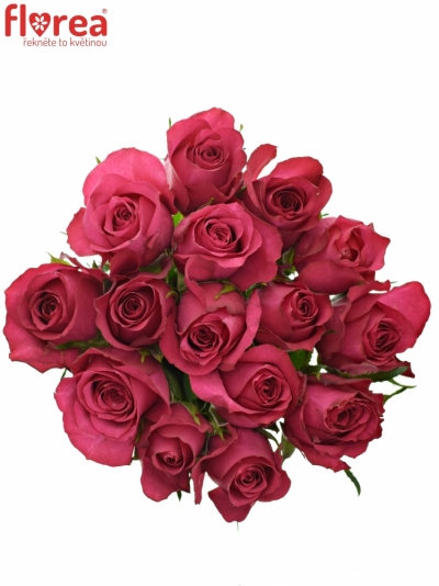 Kytice 15 malinových růží GRAND EUROPE 40cm