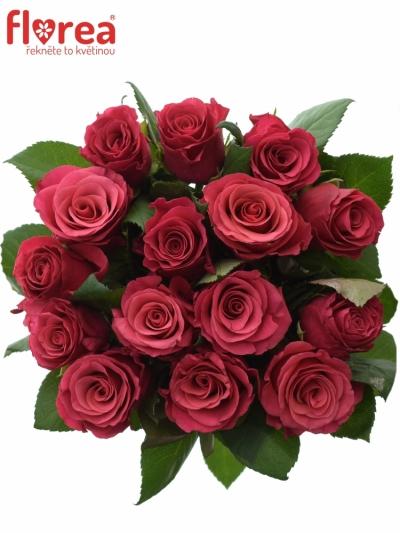 Kytice 15 malinových růží TACAZZI 60cm