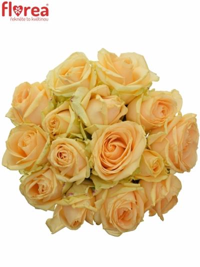 Kytice 15 meruňkových růží AVALANCHE PEACH+ 60cm