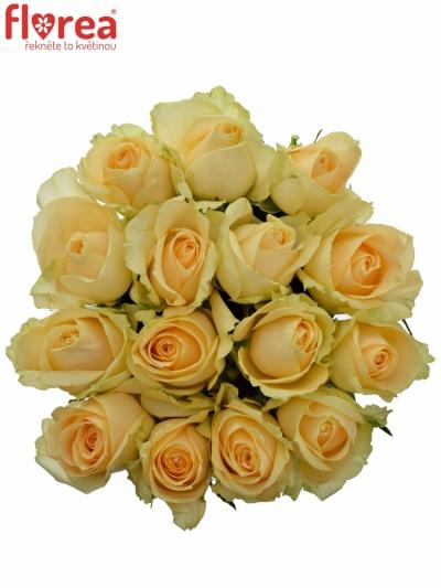 Kytice 15 meruňkových růží MAGIC AVALANCHE 60cm