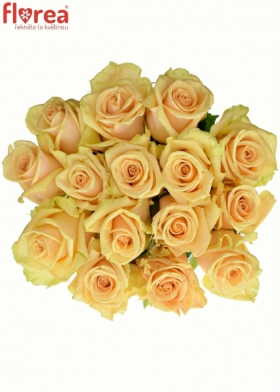 Kytice 15 meruňkových růží PEACH TACAZZI