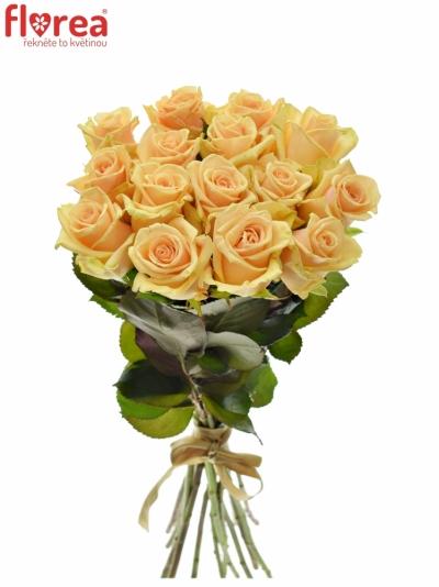 Kytice 15 meruňkových růží PRIMA DONNA