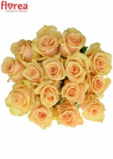 Kytice 15 meruňkových růží PRIMA DONNA 80cm