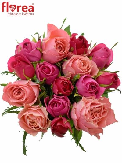 Kytice 15 míchaných růží ABERIA 40cm