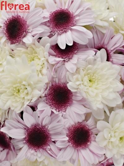 Kytice 15 míchaných chryzantém RAQUEL