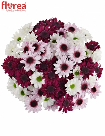 Kytice 15 míchaných chryzantém WHITE STRESSA
