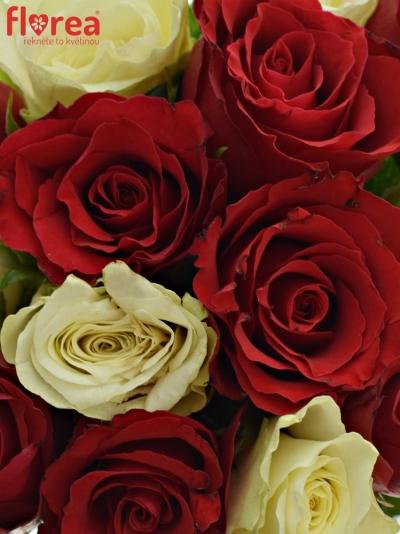 Kytice 15 míchaných růží AGATHA 60cm