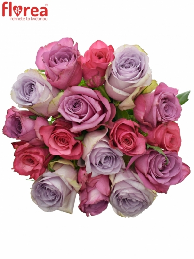 Kytice 15 míchaných růží DARIELLA 40cm
