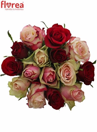 Kytice 15 míchaných růží EBIGALE 50cm