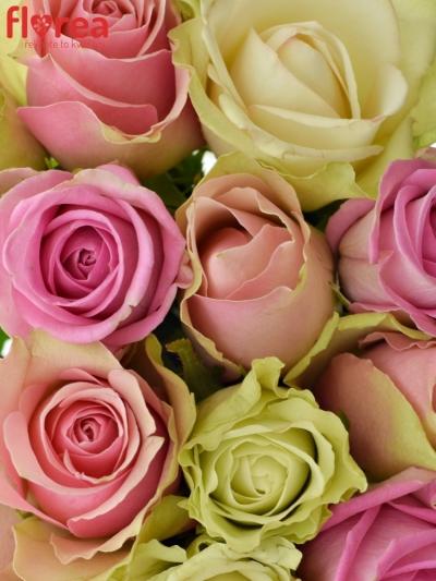 Kytice 15 míchaných růží FIOLA