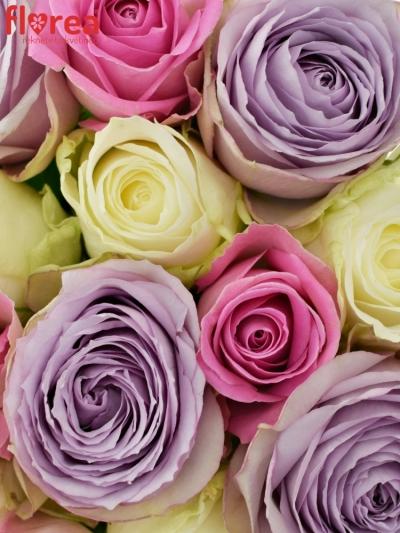 Kytice 15 míchaných růží LIGHT LORRIESS