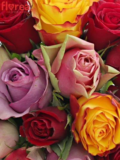 Kytice 15 míchaných růží MIRIAM 50cm