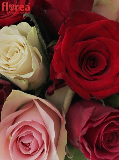 Kytice 15 míchaných růží RADWAN 50cm
