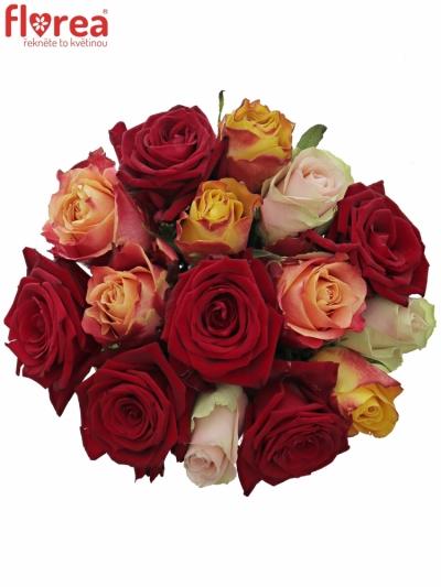 Kytice 15 míchaých růží PITTHEUS 50cm