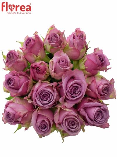Kytice 15 modrofialových růží COOL WATER 50cm