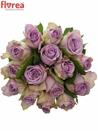 Kytice 15 modrofialových růží DANCING CLOUDS! 40cm