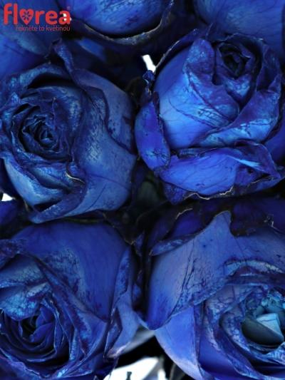 Kytice 15 modrých růží BLUE QUEEN OF AFRICA