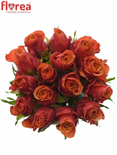 Kytice 15 oranžovočervených růží ESPANA 40cm