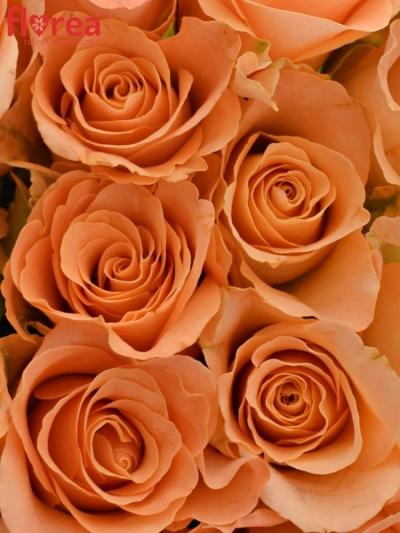 Kytice 15 oranžových růží TRIXX!