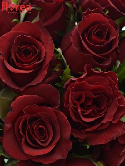 Kytice 15 rudých růží BURGUNDY 50cm