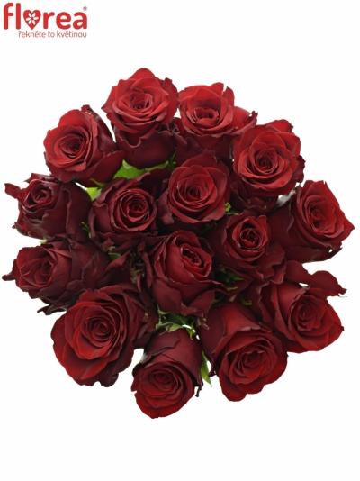 Kytice 15 rudých růží EXPLORER 60cm