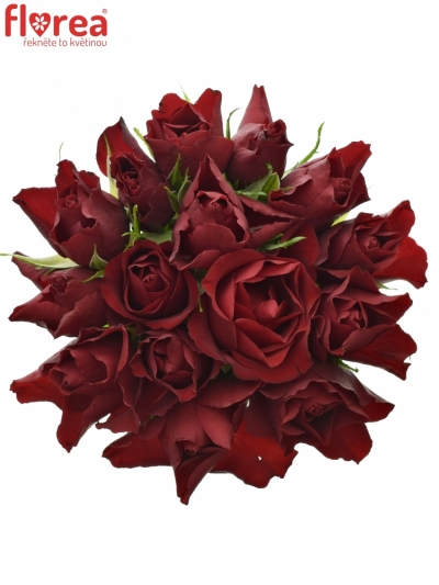Kytice 15 rudých růží RED TIFFANY 50cm