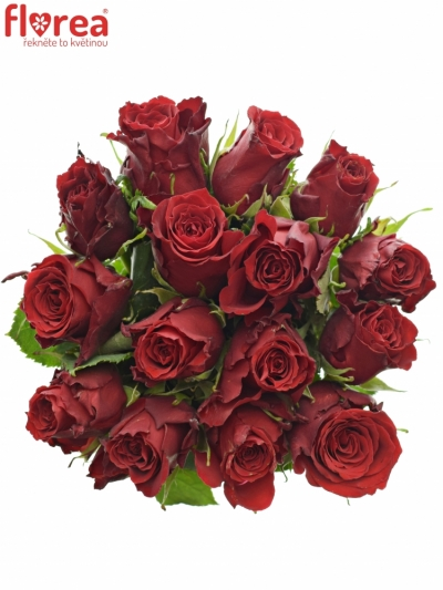 Kytice 15 rudých růží RED TORCH 40cm