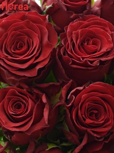 Kytice 15 rudých růží RHODOS 70cm
