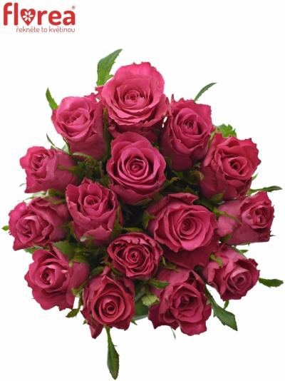Kytice  15 růží ORCHESTRA 60cm