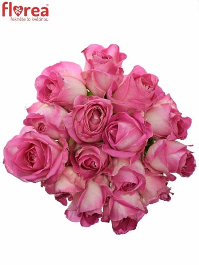 Kytice 15 růžových růží AVALANCHE CANDY+ 60cm