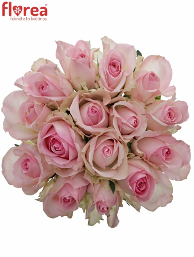 Kytice 15 růžových růží AVALANCHE SORBET+ 50cm