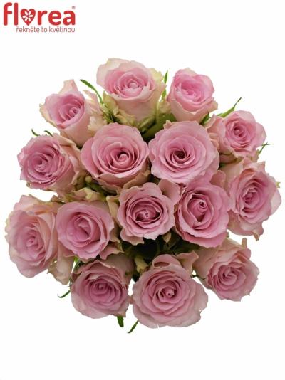 Kytice 15 růžových růží BISOU 50cm