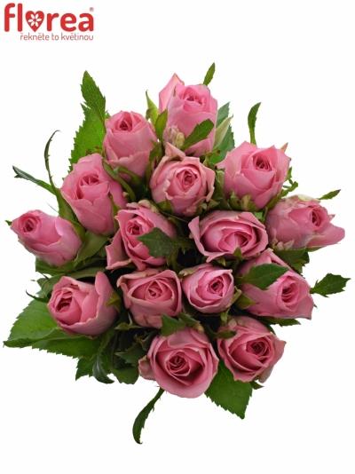 Kytice 15 růžových růží ELIZA 50cm